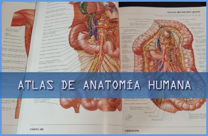 Atlas De Anatomía Humana Tienda Online Educativa