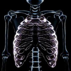 Costillas del cuerpo humano